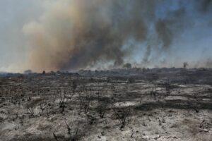Öko-Terrorismus, der westliche Umweltschützer nicht interessiert