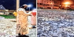 Mekka von Heuschreckenplage heimgesucht
