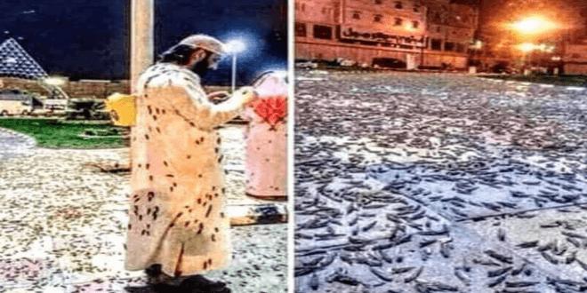 Heuschreckenplage Türkei