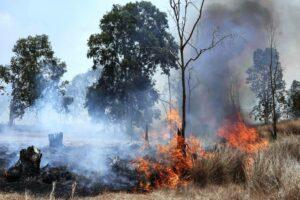 Einer der Brände, die in Israel durch Feuerdrachen und andere Brandbomben aus dem Gazastreifen