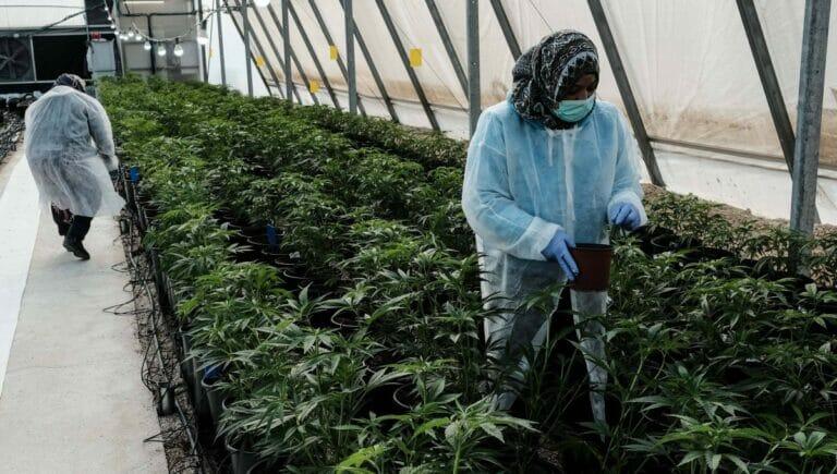 Neben medizinischen Zwecken soll der Cannabis in Israel bald auch zu Genusszwecken freigegeben werden